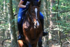 Eventing (90)