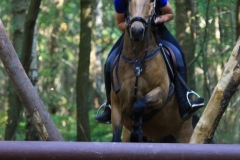 Eventing (95)