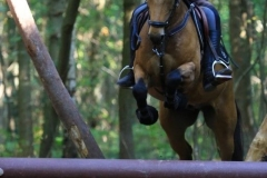 Eventing (96)