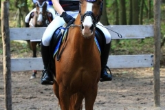 Eventing (29)