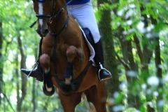 Eventing (31)