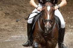 Eventing (42)