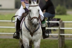 Eventing (78)
