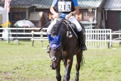 Eventing (54)