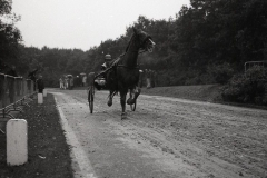 HDV_1965 (9)