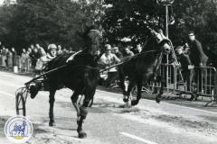 HDV_1966 (9)