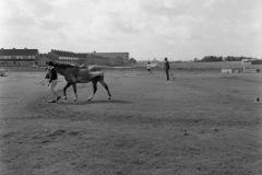 HDV_1968 (11)