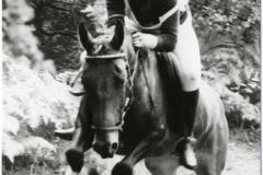 HDV_1978 (5)