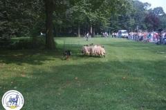 Hondendemo (4)