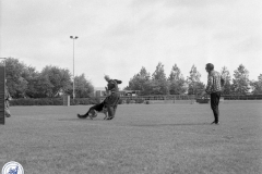 Hondendressuur (1)