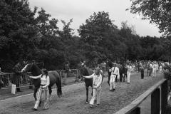 Paarden-Pony's defilé (1)