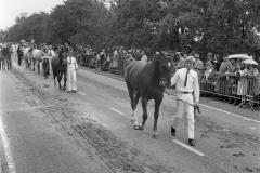 Paarden-Pony's defilé (10)