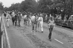 Paarden-Pony's defilé (11)