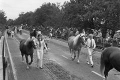 Paarden-Pony's defilé (12)