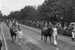 Paarden-Pony's defilé (13)