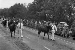 Paarden-Pony's defilé (15)