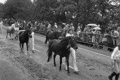 Paarden-Pony's defilé (16)