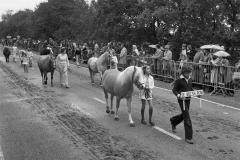 Paarden-Pony's defilé (17)