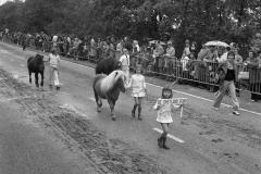 Paarden-Pony's defilé (18)