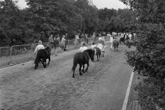 Paarden-Pony's defilé (19)