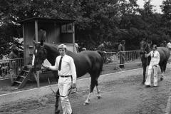 Paarden-Pony's defilé (2)