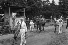 Paarden-Pony's defilé (3)