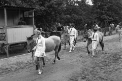 Paarden-Pony's defilé (5)