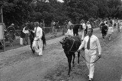 Paarden-Pony's defilé (6)