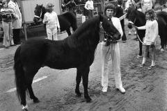 Paarden-Pony's defilé (7)