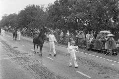 Paarden-Pony's defilé (8)