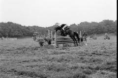 Paardensport (10)