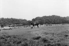 Paardensport (12)