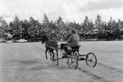 Paardensport (13)