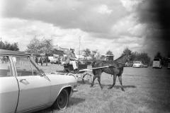 Paardensport (15)