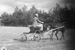Paardensport (17)