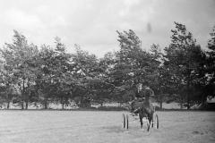 Paardensport (18)
