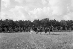 Paardensport (19)