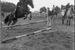 Paardensport (21)