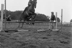 Paardensport (22)