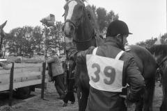 Paardensport (23)