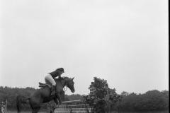 Paardensport (24)