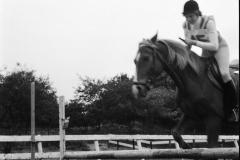 Paardensport (3)