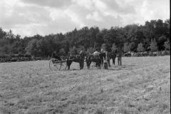 Paardensport (37)