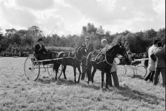 Paardensport (38)