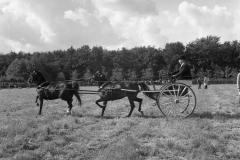 Paardensport (39)