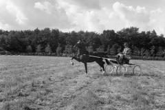 Paardensport (40)