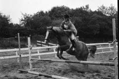 Paardensport (5)