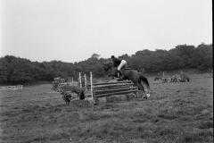 Paardensport (6)