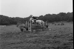Paardensport (8)