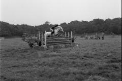 Paardensport (9)